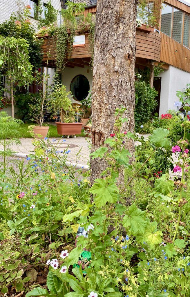 Insektenfreundlich bepflanzte Baumscheibe vor dem Zentrum.